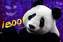 Panda Pop / Remeras Panda Pop