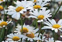 Pretty Flowers / by Kristine Lingard