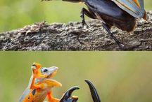 Süße Tiere und so