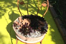 Succulent  chair / Vintage iron garden chair. Scrap pottery salvaged from terra cotta tree and bowl