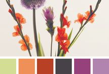 Scrap Color Palettes / by Carla Cooper