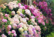 Heavenly Hydrangeas / by Patricia Main
