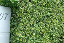 Boarder hedging