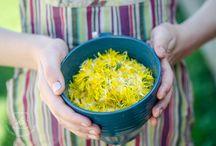 Making dandelion wine.
