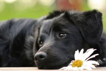 Happiness is a warm Puppy / by Nicole Herreman