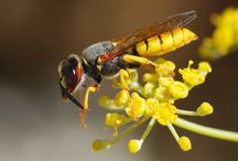 Insects Facts / Discover amazing facts about insects.