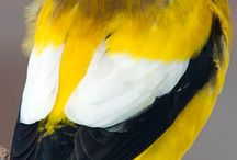 .aves