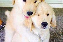 Puppies ♥