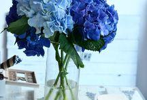 Florencia / Flowerbox