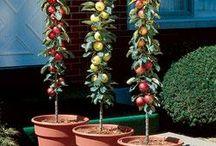 tuin fruitbomen en struiken