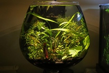 Walstad Bowl Project