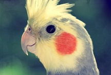 Lovely Parrots