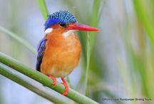 Ethiopia Birding Tours / Pictures from some of our bird tours to Ethiopia!