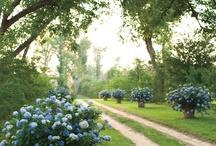 Gorgeous Gardens  / by Ophelia's Renaissance