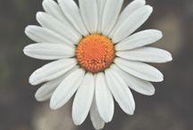 flowers / flower always beautiful