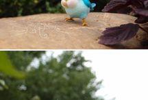 vtáčie zázraky