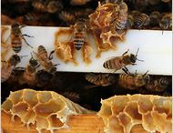 Bees, Honey, & Bees wax / by Cj Richmond