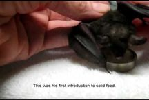Oh bats! / by Silversage Healthnutrition