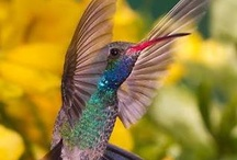 Bird Watching / by Janice Benson