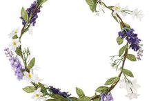 Lawenda / Lavender