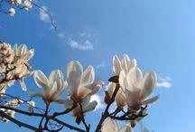 Ми зібрали список весняних чудес України, які обов'язково потрібно побачити весною