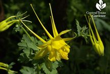 Native Texas plants / Native Texas plants to attract wildlife and save water.