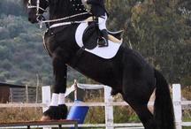 Hester små ryttere