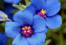 fleurs {annuals}