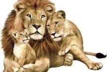 Safari animal wall art
