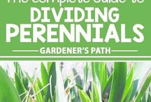 Perennials / Everything you need to know about growing, caring for, and troubleshooting perennial plants.