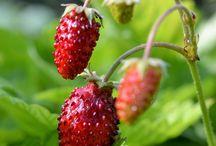 BERRIES / Garden berries