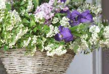 Basket Arrangements / Basket arrangements