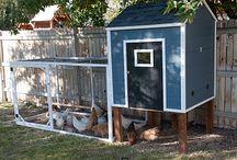 Chicken coop designs / by Devon Burkhalter