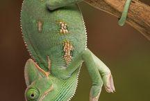 Reptile fam