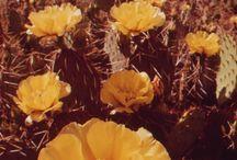Yellow things <3