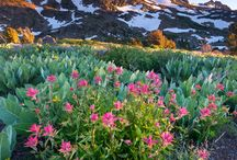 California Bloom 2017 / Thanks to 2017's rainy downpours and snowy deluge, flower seeds are germinating and roots are spreading. See some of the best wildflower blooms across the state. Don't forget to tag #CaliforniaBloom for a chance to be featured.