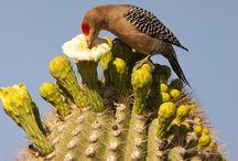 Arizona Birds / Avian and Carrion od Arizona. Come and visit. www.sedonavacations.com   See you soon!
