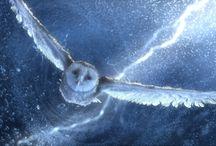 Owl - Uilen