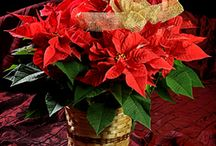 Christmas Flowers / Beautiful designs for Christmas centerpieces, Christmas gifts, holiday gifts for family and friends near or far!