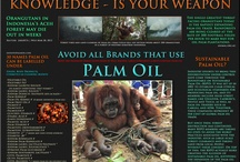 No palm oil!!!