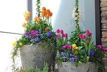 Beplantning sommerblomster