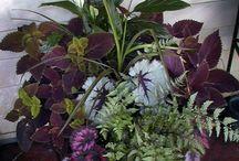 Gardening - Pots