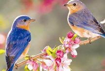 Många olika djur och fåglar 3 / by Helena Jansson