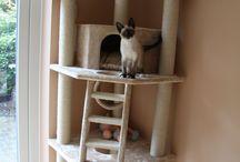 Kočičí království / - vše možné, co souvisí s chovem koček
