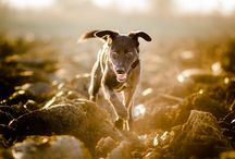 ANIMALS / by Sergio Alfaro