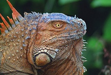 Exotic animals from Costa Rica / by Ana Kling