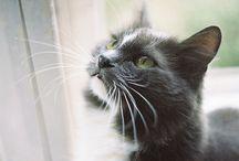 Cats / by Lisa Mabry