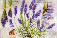 Lavender / Levendula