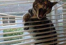Mietze Katzen