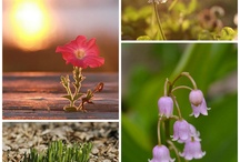 Photographs of Flowers / by Picaboo